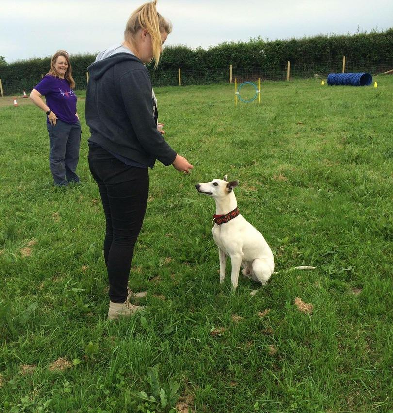 Paws Control Dog Training Barnstaple Devon Barnstaple